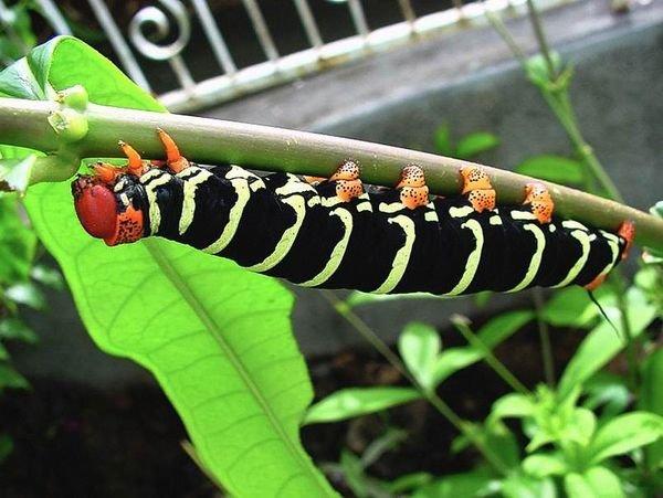 insecte011.jpg